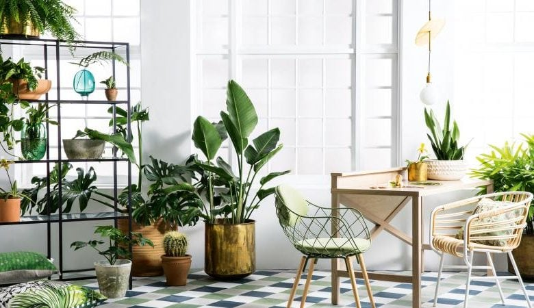 15 Houseplants for Bringing Health & Wealth to Your Abode